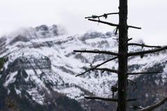 Baum ohne Blätter mit schneebedecktem Berg im Hintergrund lizenzfreie stockbilder