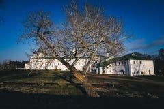 Baum ohne Blätter mit weißem Haushintergrund Lizenzfreies Stockfoto