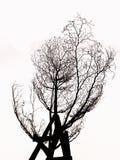 Baum ohne Blätter Schattenbild lokalisiert Stockfotografie