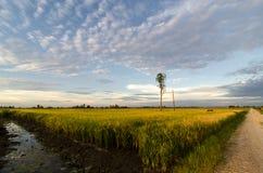 Baum Paddy Field Withs A Lizenzfreies Stockbild