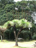 Baum-Palme Australien Lizenzfreie Stockfotos
