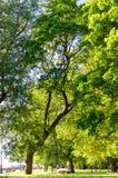 Baum am Park Stockbild