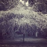 Baum am Park Lizenzfreie Stockfotografie