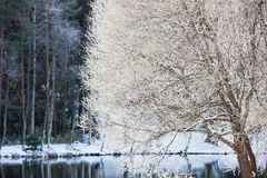 Baum am Park bedeckt im Schnee Lizenzfreie Stockfotos