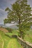 Baum, Pfad und Wand Lizenzfreie Stockbilder