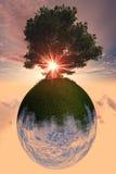 Baum-Planet Stockfotos