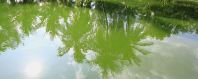 Baum reflektiert im Fluss Stockfotografie