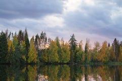 Baum reflektiert im Fluss Stockfoto