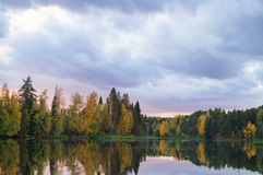 Baum reflektiert im Fluss Stockbilder