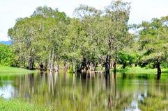 Baum reflektiert im Wasser Stockbilder