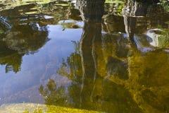 Baum reflektiert im Wasser Stockfoto