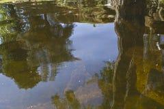 Baum reflektiert im Wasser Lizenzfreie Stockfotos