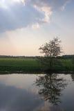 Baum reflektierte sich im Fluss mit Tageslicht Stockbild
