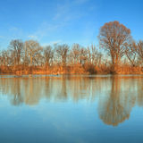 Baum refletction Stockfotos