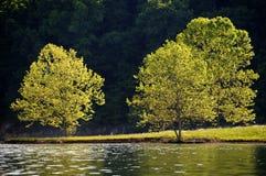 Baum-Reflexion stockbild