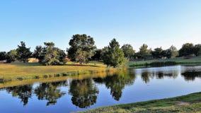 Baum-Reflexion auf Teich stockfotos