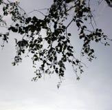 Baum-Reflexion im Pfund Stockfotografie