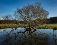 Baum-Reflexion im Regenwasser Lizenzfreie Stockfotos