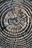 Baum-Ringe Stockfotos