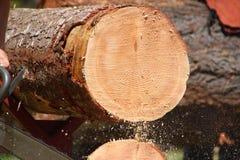 Baum-Ringe Lizenzfreie Stockfotografie