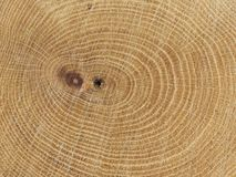 Baum-Ringe Lizenzfreies Stockfoto