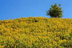 Baum-Ringelblumen-Feld Lizenzfreie Stockfotos