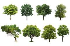 Baum-Satz lokalisiert auf weißem Hintergrund lizenzfreie stockfotografie