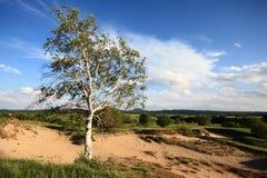 Baum in schädigender Wiese Lizenzfreie Stockbilder