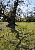 Baum-Schatten Stockbild