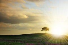 Baum-Schattenbild Lizenzfreies Stockfoto