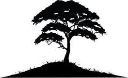 Baum-Schattenbild lizenzfreie abbildung