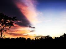 Baum-Schattenbild bei Bogor stockfoto