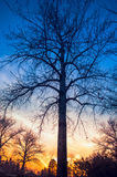 Baum-Schattenbild bei Sonnenuntergang Lizenzfreies Stockbild