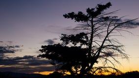 Baum-Schattenbild bei Sonnenuntergang stock video