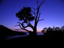 Baum-Schattenbild an der Dämmerung Stockfotografie