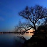 Baum-Schattenbild durch See Monona Lizenzfreie Stockfotos