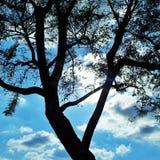 Baum-Schattenbild gegen blauen Himmel Stockfotos