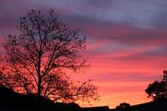 Baum-Schattenbild am Sonnenuntergang Stockfoto