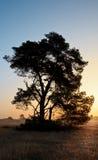 Baum-Schattenbild während des Sonnenaufgangs Lizenzfreies Stockbild