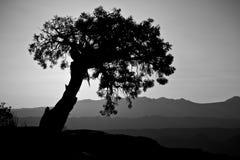 Baum-Schattenbilder über dem Canyonlands von Arizona Stockfotografie