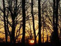 Baum-Schattenbilder bei Sonnenuntergang im Herbst Lizenzfreie Stockfotografie