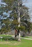 Baum schattiert einen Picknickplatz Stockfotos