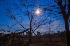 Baum schlug durch Blitz in der Abendsonne Stockbilder