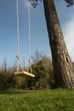 Baum-Schwingen im Garten Stockfotos