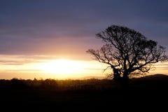 Baum silhouettiert durch die Sonne des frühen Morgens, die über die Sussex-Abstiege, England steigt lizenzfreie stockfotos