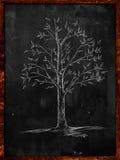 Baum-Skizze mit Blättern auf Tafel vektor abbildung