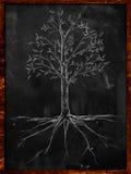 Baum-Skizzenblätter und -wurzel auf Tafel vektor abbildung