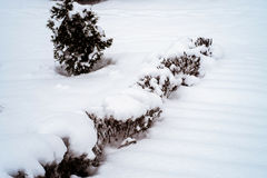 Baum Snowy Büsche, der Treppe und der Tanne am bewölkten Tag Lizenzfreie Stockfotografie