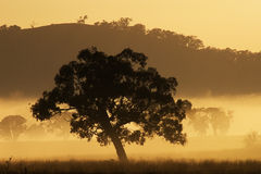 Baum am Sonneanstieg und -nebel Lizenzfreie Stockfotografie