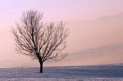 Baum am Sonnenaufgang Lizenzfreie Stockfotografie